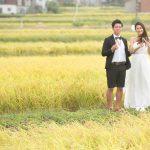 結婚式前撮り    稲刈りプロポーズ??  第二弾